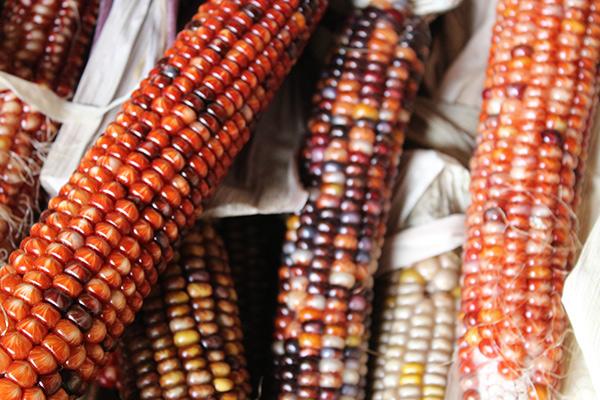 Native corn